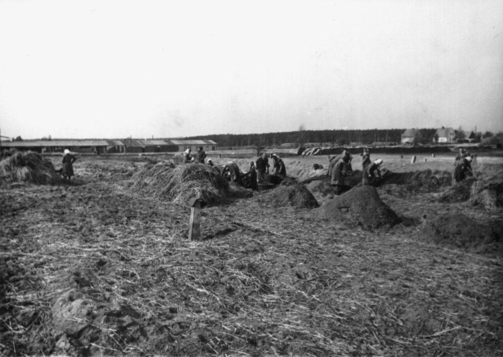 Weibliche Häftlinge des KZ Ravensbrück bei Feldarbeiten, im Hintergrund das Fabrikgebäude der späteren DAW-Tischlerei, ca. 1940/41. Fotograf/in unbekannt (MGR/SBG, Foto-Nr. 1700)